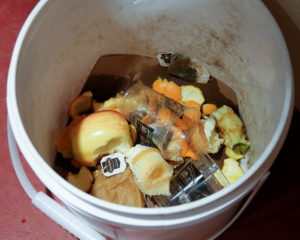 A typical compost bucket with a high percentage of correct items included.