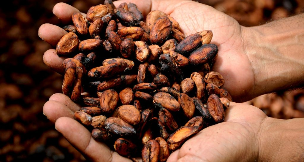 Cacao beans. Image courtesy of Pixabay.