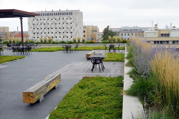 School of Human Ecology Green Rooftop UW-Madison (Campus Planning & Landscape Architecture)