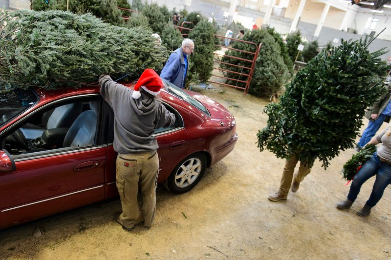 Undergraduate students help sell conifer trees and load them atop customers' cars during the UW-Madison Forestry Club's annual Christmas tree sale at the Stock Pavilion at the University of Wisconsin-Madison on Dec. 4, 2015. (Photo by Jeff Miller/UW-Madison)